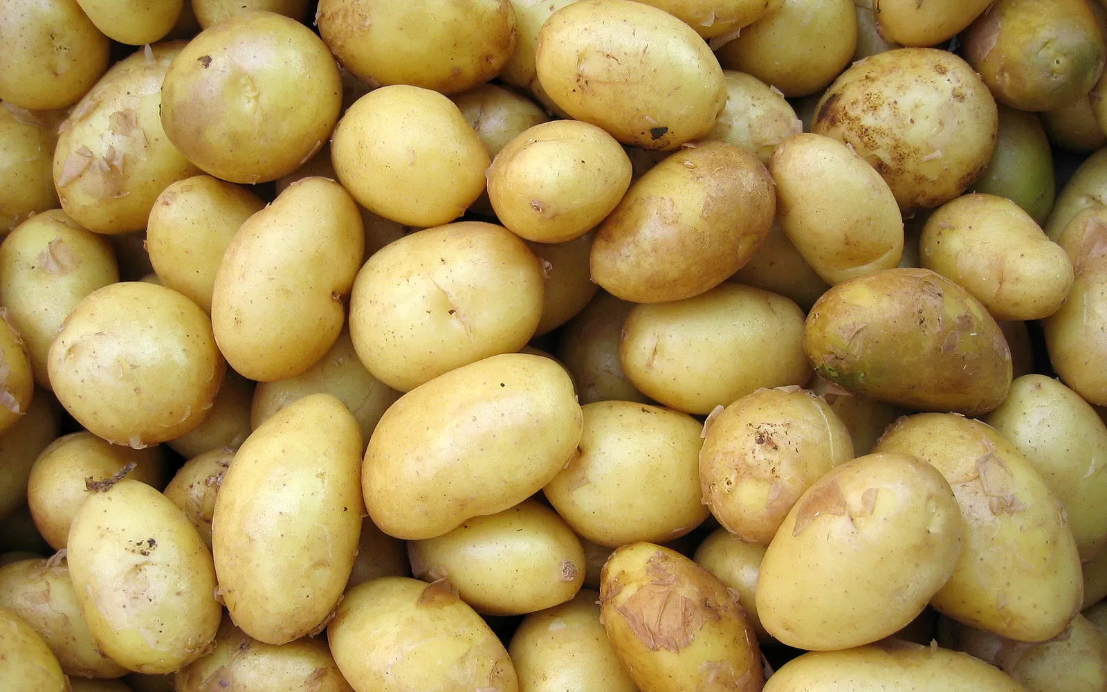 Special Recommendation: Potatoes (Not Just A Stupid Thing From The Ground)